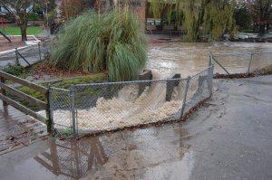 Calder weir at flood stage